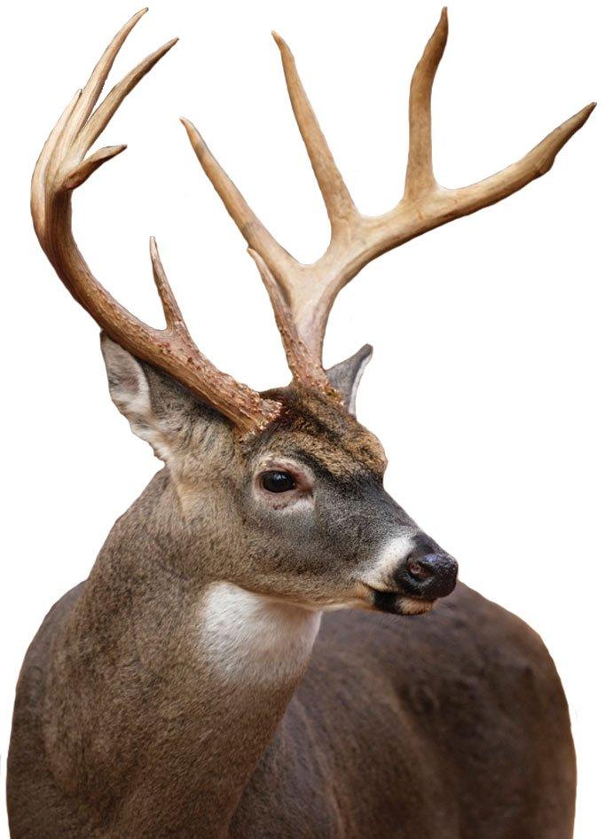Fall Hunting in MN
